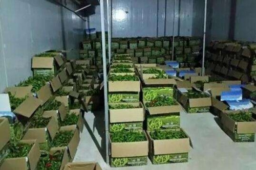 浅析小型蔬菜冷库快速发展形式